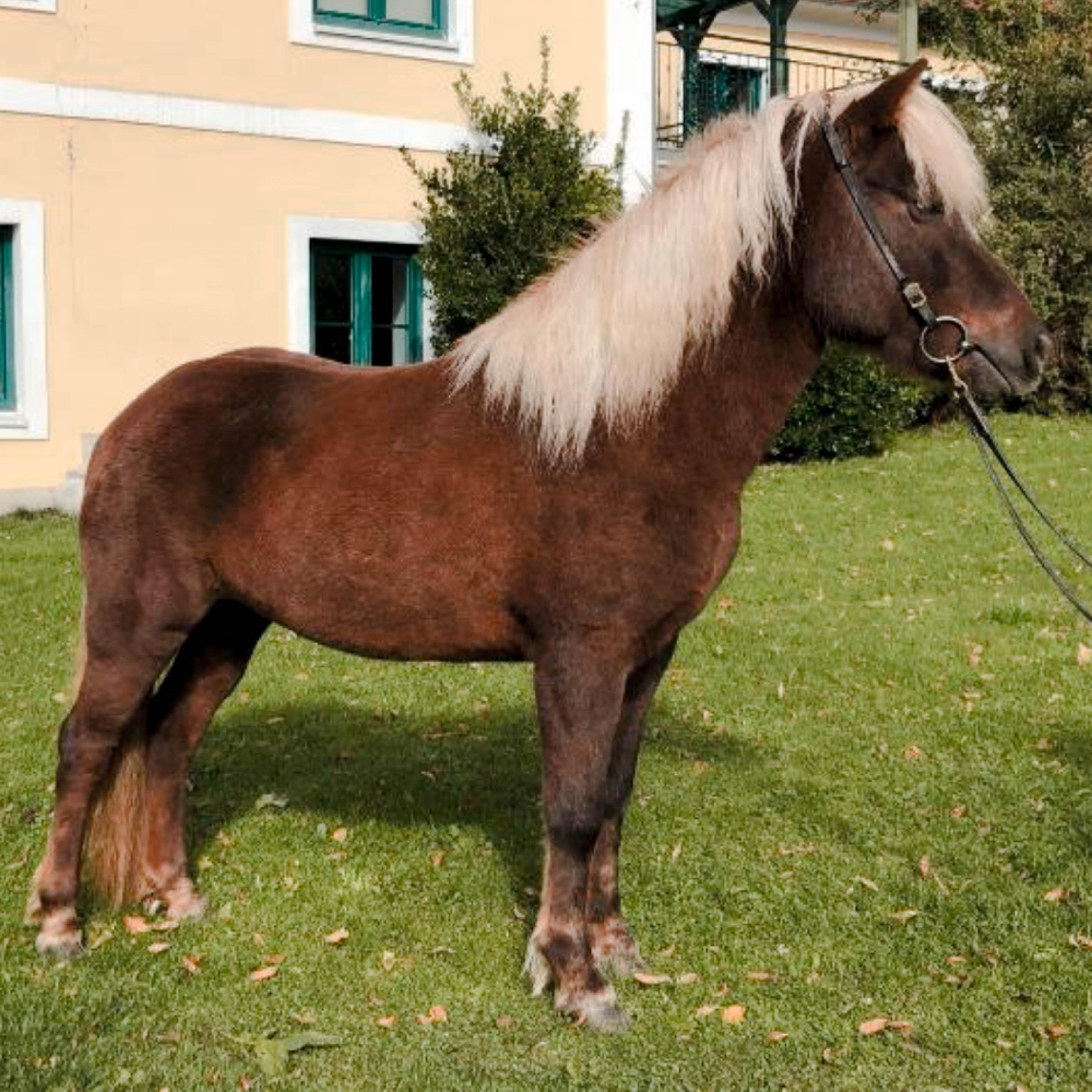 pferd2-2